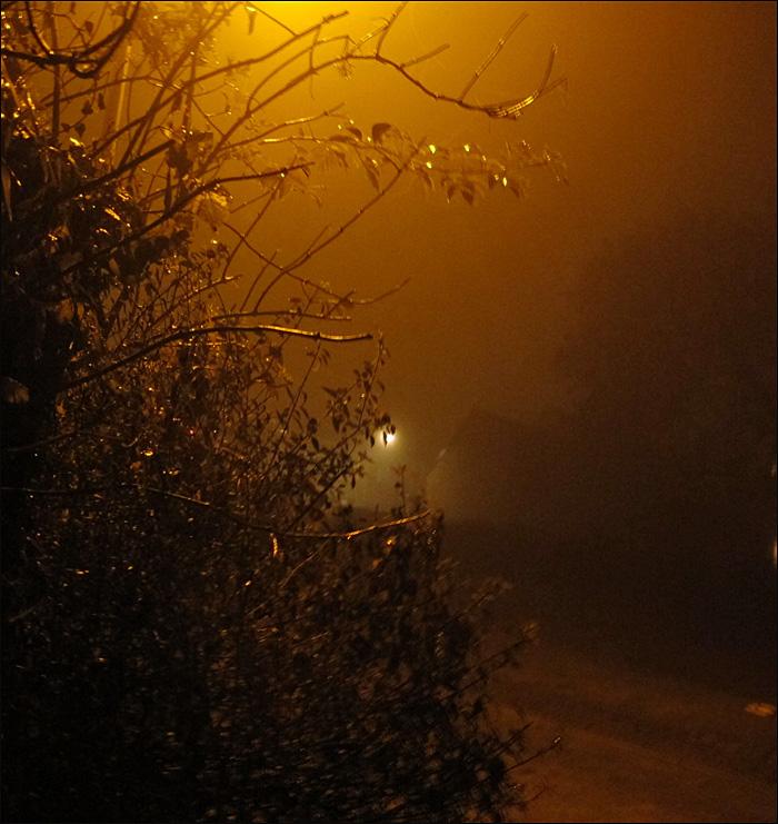 Fog VI