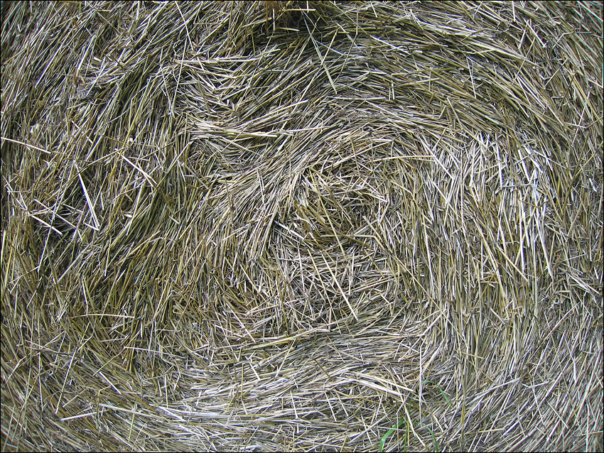 Roll of Hay